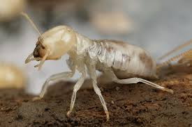 Termite [Photo Courtesy: commons.wikipedia.org] how to invest in real estate beginner real estate investor